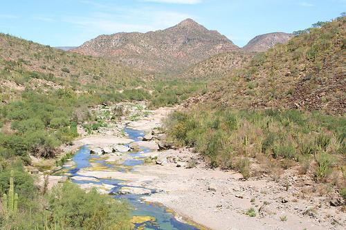 Stream In The Dessert  desert stream Ann