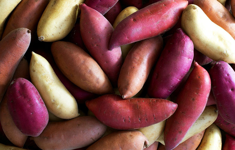 Sweet Potato And Diabetes  Are Sweet Potatoes Really Good for Diabetes