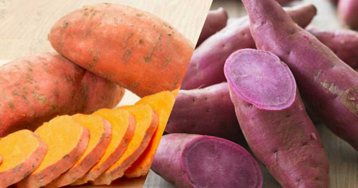 Sweet Potato And Diabetes  Should You Eat Sweet Potatoes If You Have DIabetes