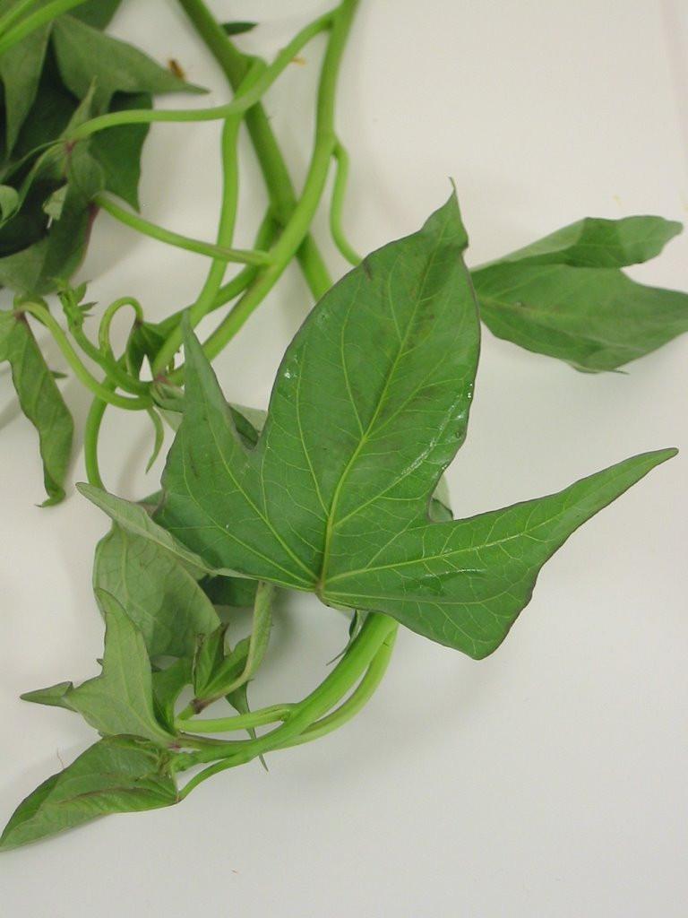 Sweet Potato Leaves  Unusual Greens Part 3 Sweet Potato Leaves • Slices of