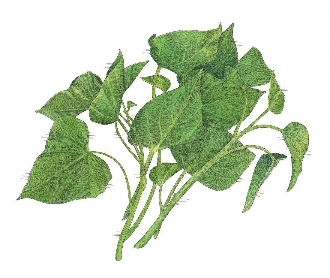Sweet Potato Leaves  Sweet Potato Greens – Garden & Gun