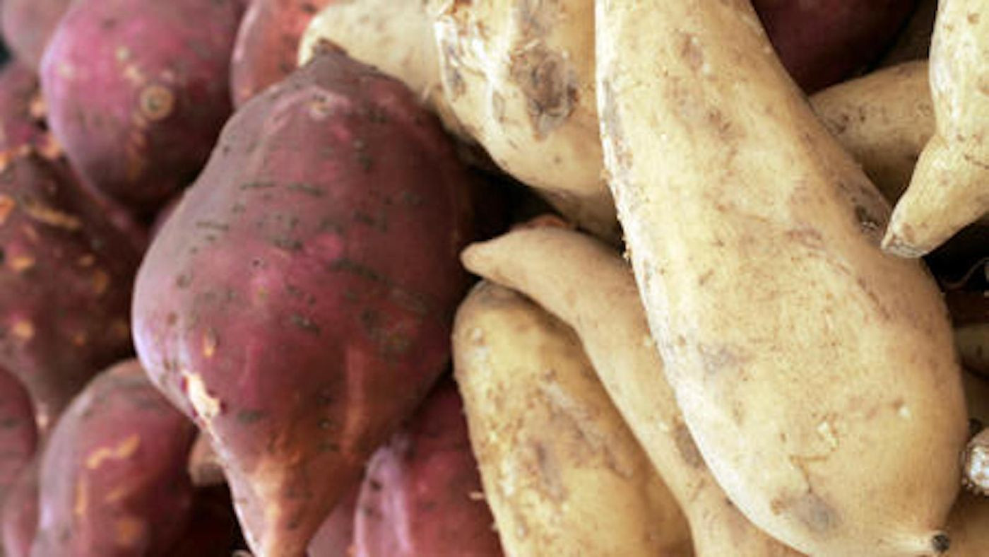 Sweet Potato Season  Pies pancakes bread pudding and more great recipes for