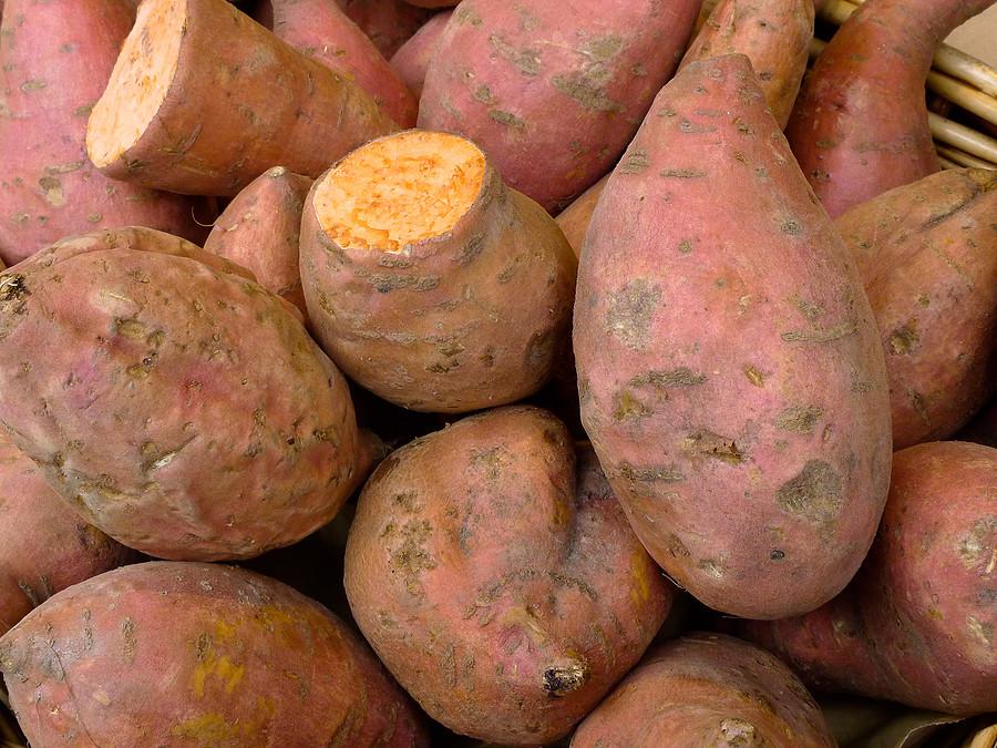 Sweet Potato Season  Sweet Potatoes Short Summer Varieties Harvest to Table