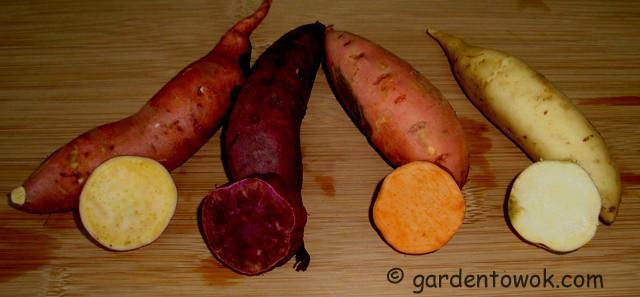 Sweet Potato Varieties  Harvest Monday October 7 2013 – 4 Varieties of Sweet