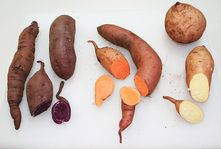 Sweet Potato Varieties  Sweet Potatoes are one of natures Super foods – Wickedfood
