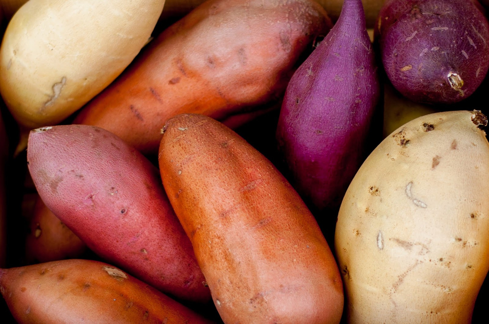 Sweet Potato Varieties  Quinoa Stuffed California Sweetpotatoes Noms McGee