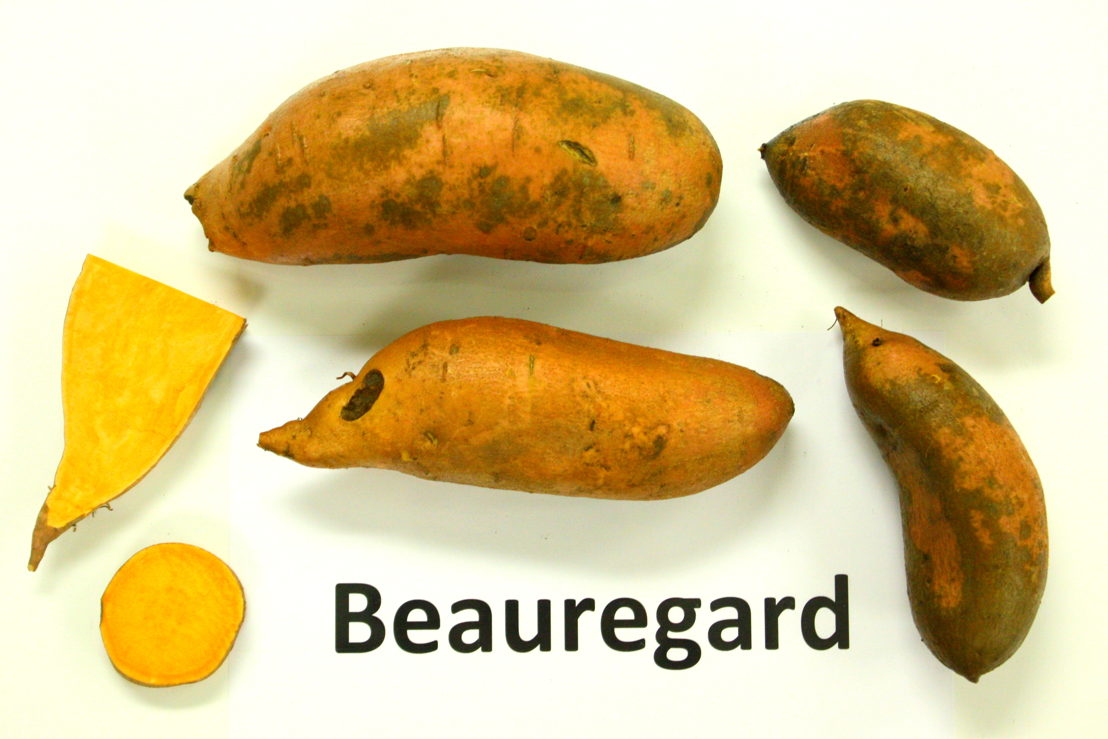 Sweet Potato Varieties  Horticulture Happenings Working on 2012 Sweet Potato
