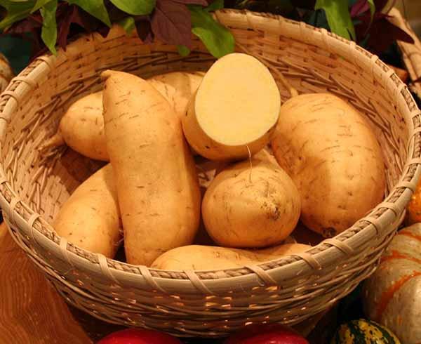 Sweet Potato Varieties  Sweet Potatoes Tasty Farmer