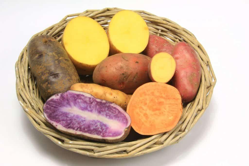 Sweet Potato Varieties  Top 6 Health Benefits of Sweet Potatoes Decadently