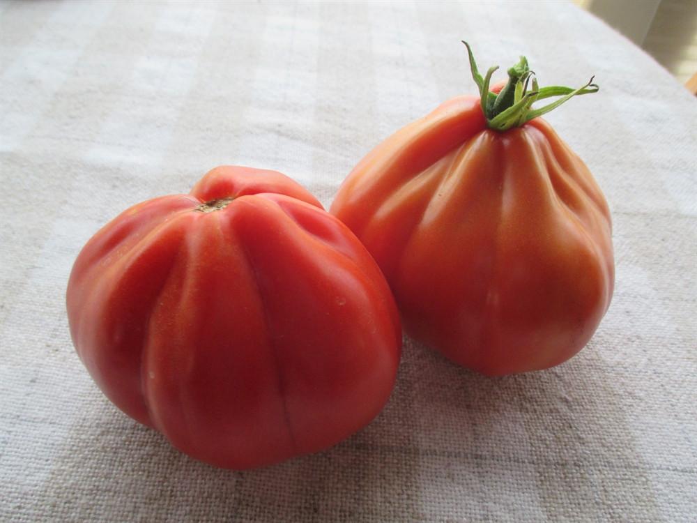 """Tomato In Italian  Italian Paste """"Cultural Mix"""" Tomato"""
