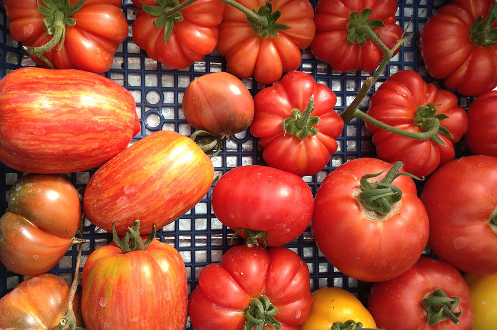 Tomato In Italian  A guide to Italian tomatoes Jamie Oliver