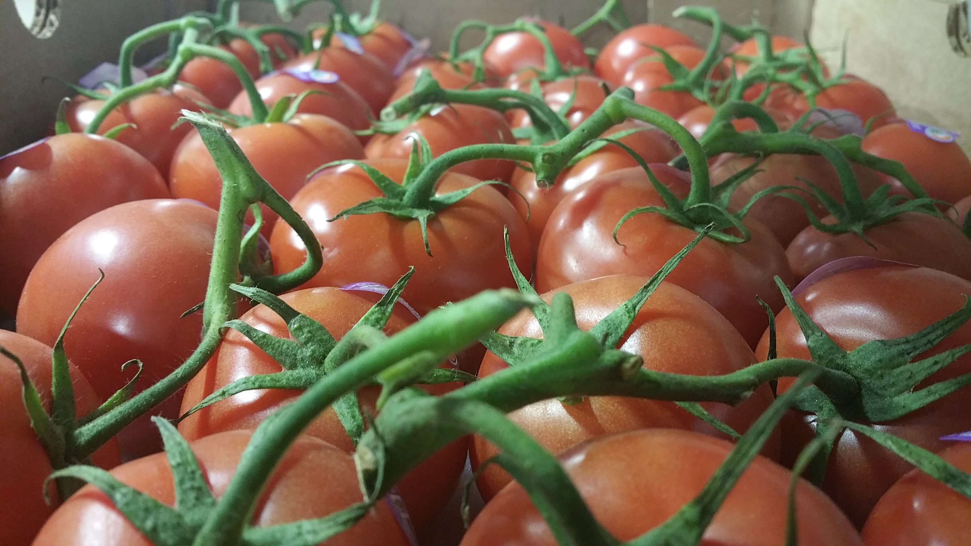 Tomato Vegetable Or Fruit  Is a Tomato a Fruit or a Ve able Find out Here
