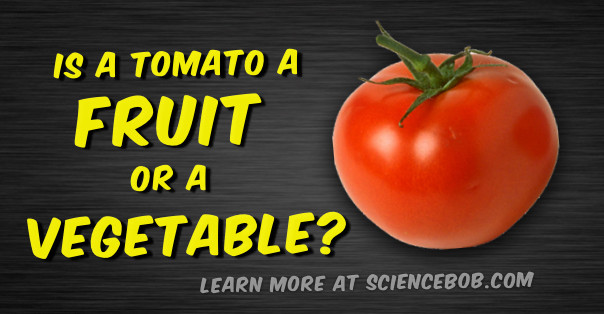 Tomato Vegetable Or Fruit  Is a tomato a fruit or a ve able ScienceBob