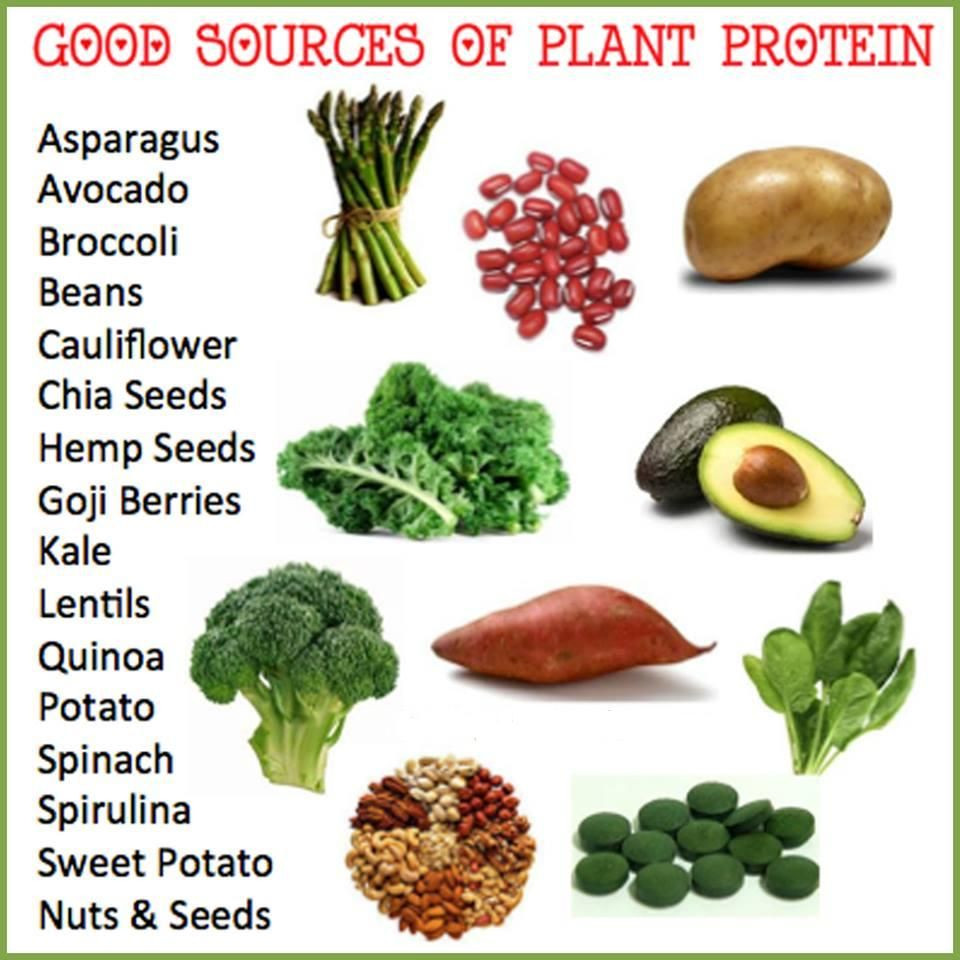 Vegetarian Foods High In Protein  Protein Foods for Ve arians Protein Foods It is