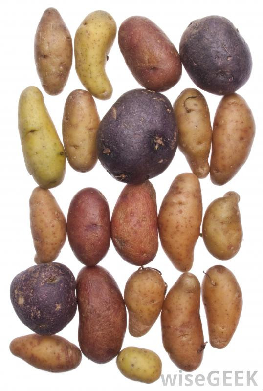 What Is A Potato  What is a Potato with pictures