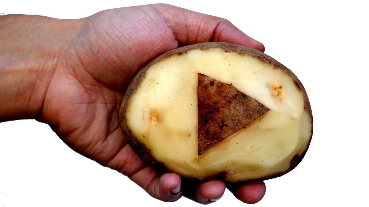 What Is A Potato  How is Like a Potato
