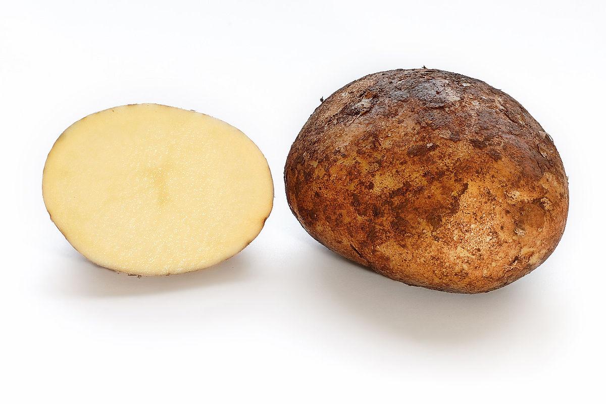 What Is A Potato  Potato Simple English the free encyclopedia