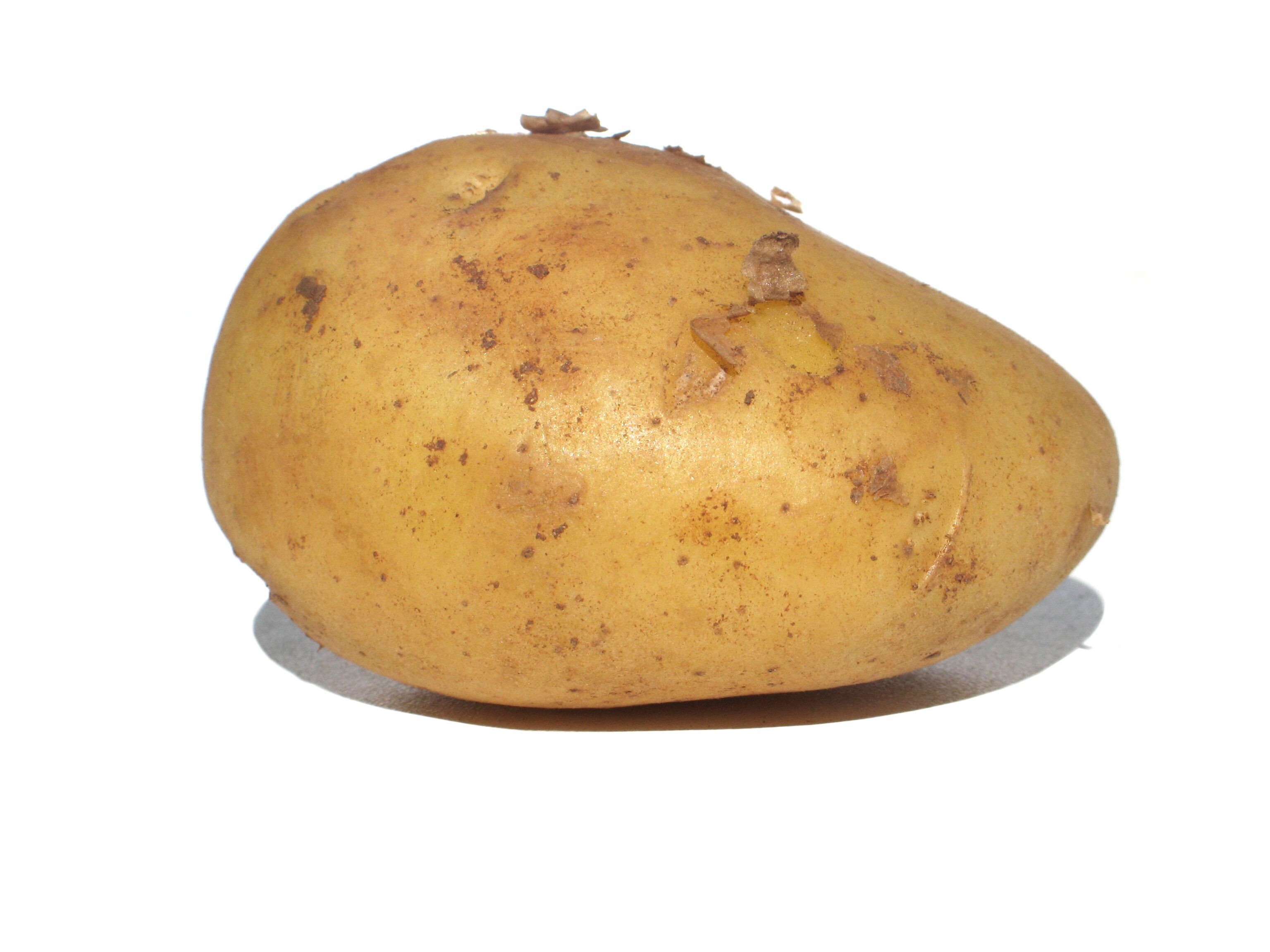 What Is A Potato  the long day and night of the potato – Simcoe Organics