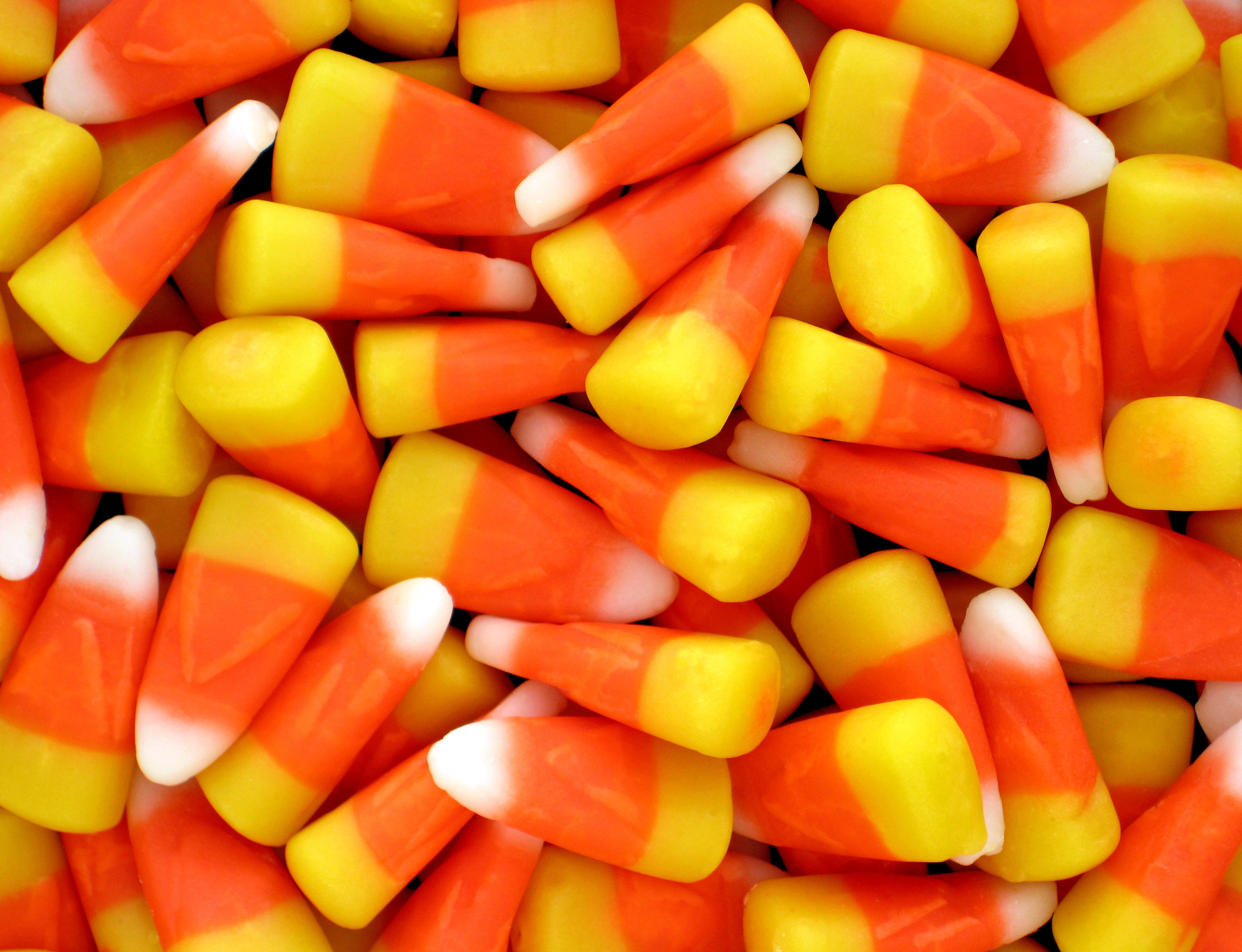 What Is Candy Corn  Can You Grow Candy Corn