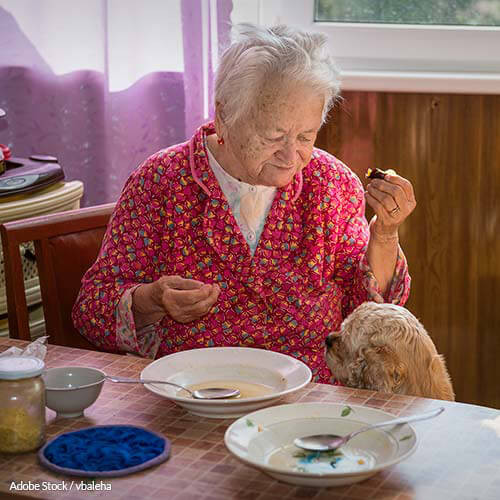 What Should I Have For Dinner Wheel  Cutting Meals Wheels Hurts Elderly And Low In e