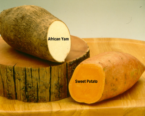 What'S The Difference Between A Sweet Potato And A Yam  sanödox Stu s Show that Nigeria Has The Highest