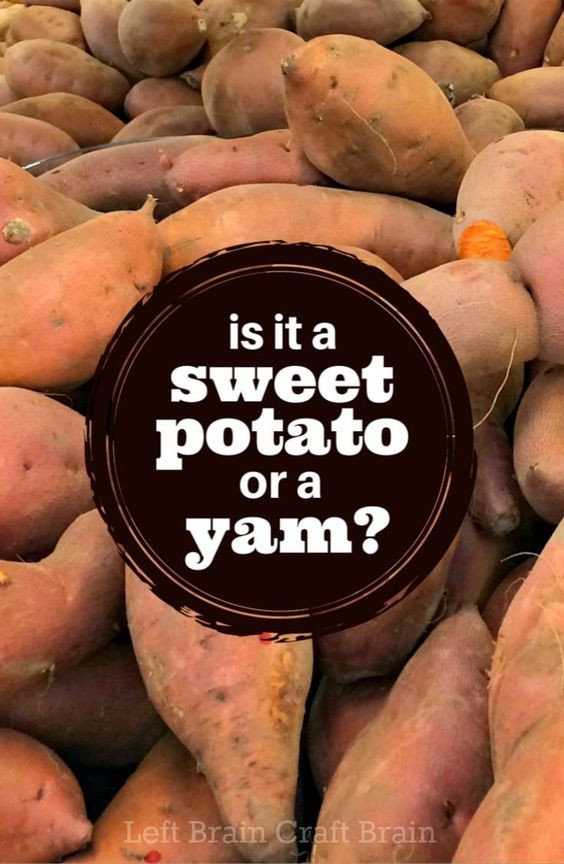 What'S The Difference Between A Sweet Potato And A Yam  What s the Difference Between Sweet Potatoes and Yams