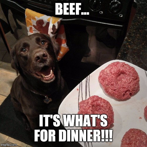 Whats For Dinner Meme  Chuckie the Chocolate Lab Imgflip