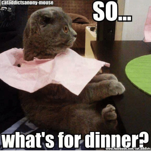 Whats For Dinner Meme  Cataddictsanony Mouse SO SOL What s for Dinner