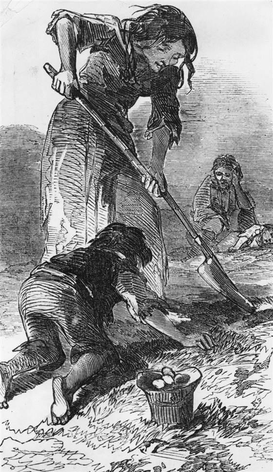 When Was The Potato Famine  The Irish Famine