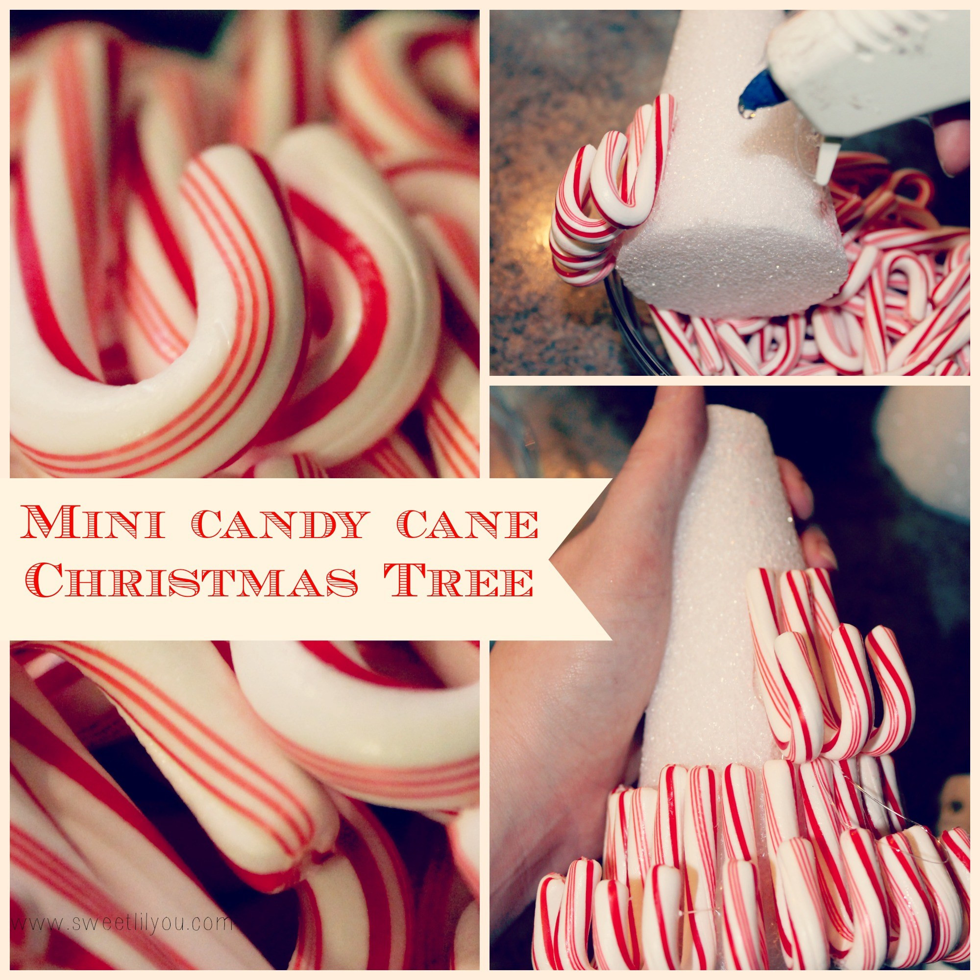 Candy Cane Christmas Shop  Holiday Entertaining & Decorating with Price Chopper