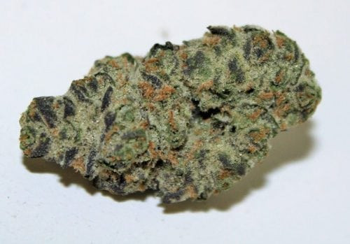Christmas Cookies Strain  Coffee & Cookies Strains to Warm Up and Elevate Your