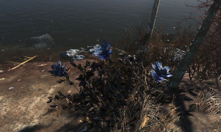 Fallout 4 Carrot Flower  Fallout4 OpTicTrukZ s Plants and Herbs Revamped Fallout