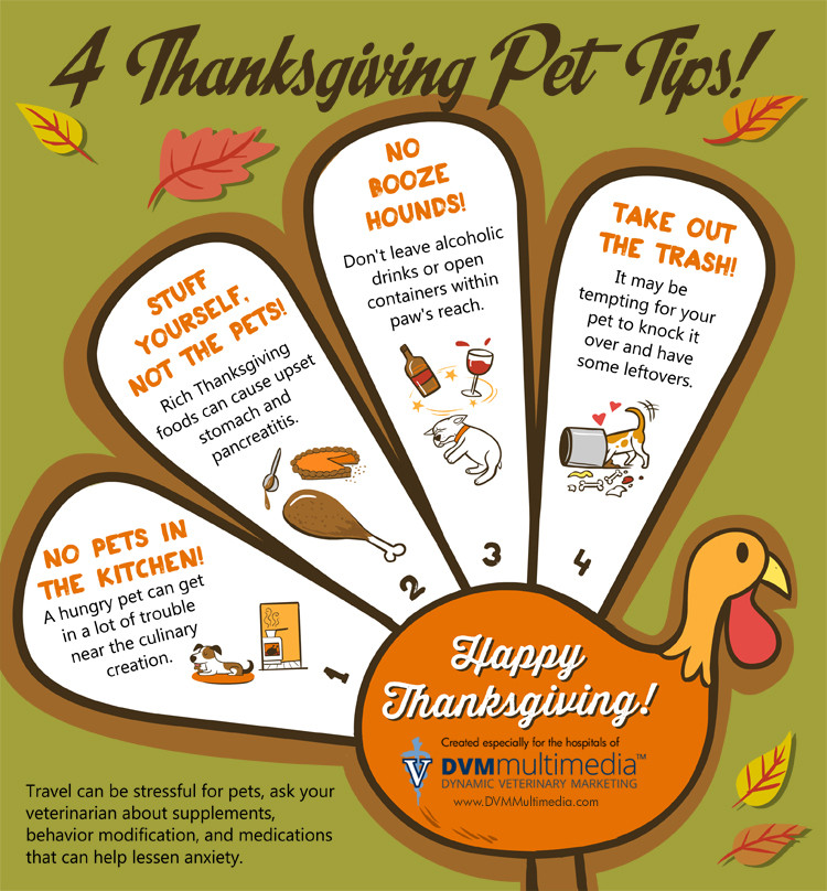 Healthy Thanksgiving Tips  4 Thanksgiving Pet Tips Golden Woofs