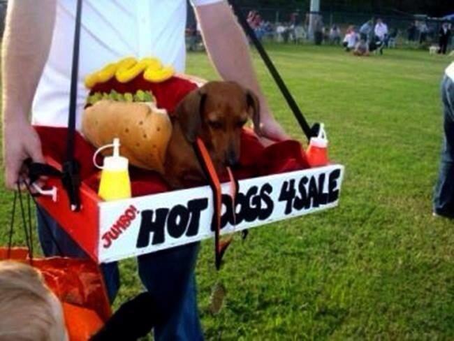 Hot Dog Halloween Costume For Dogs  Best 25 Dachshund costume ideas on Pinterest