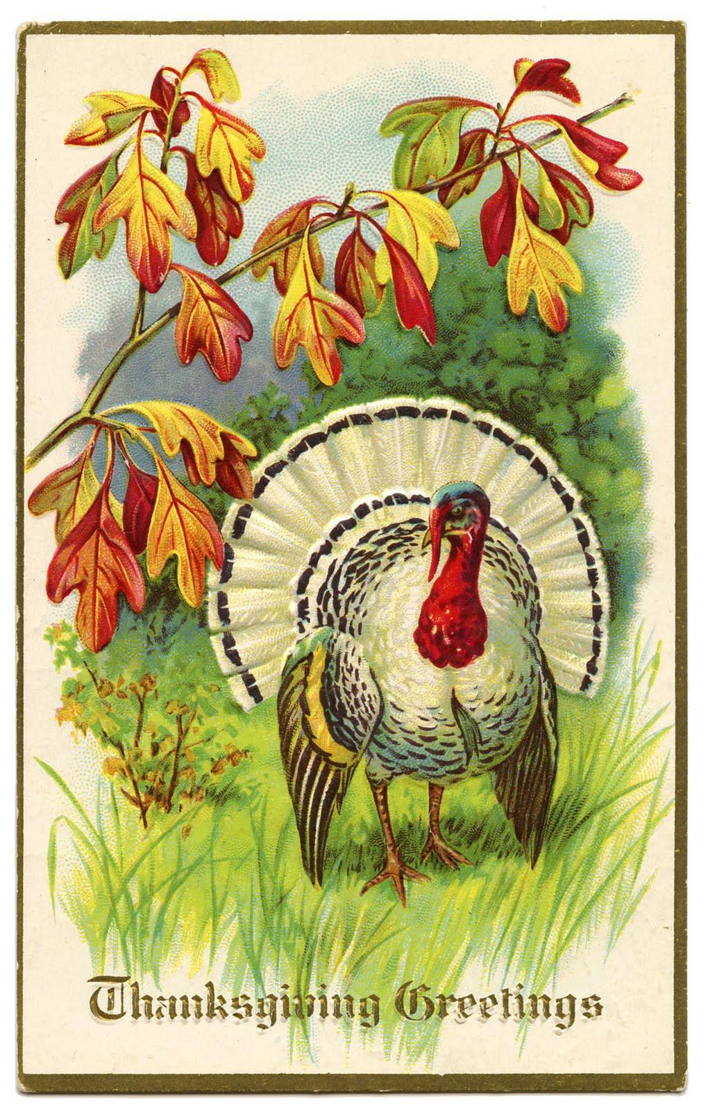Thanksgiving Turkey Art  Vintage Thanksgiving Clip Art White Turkey The