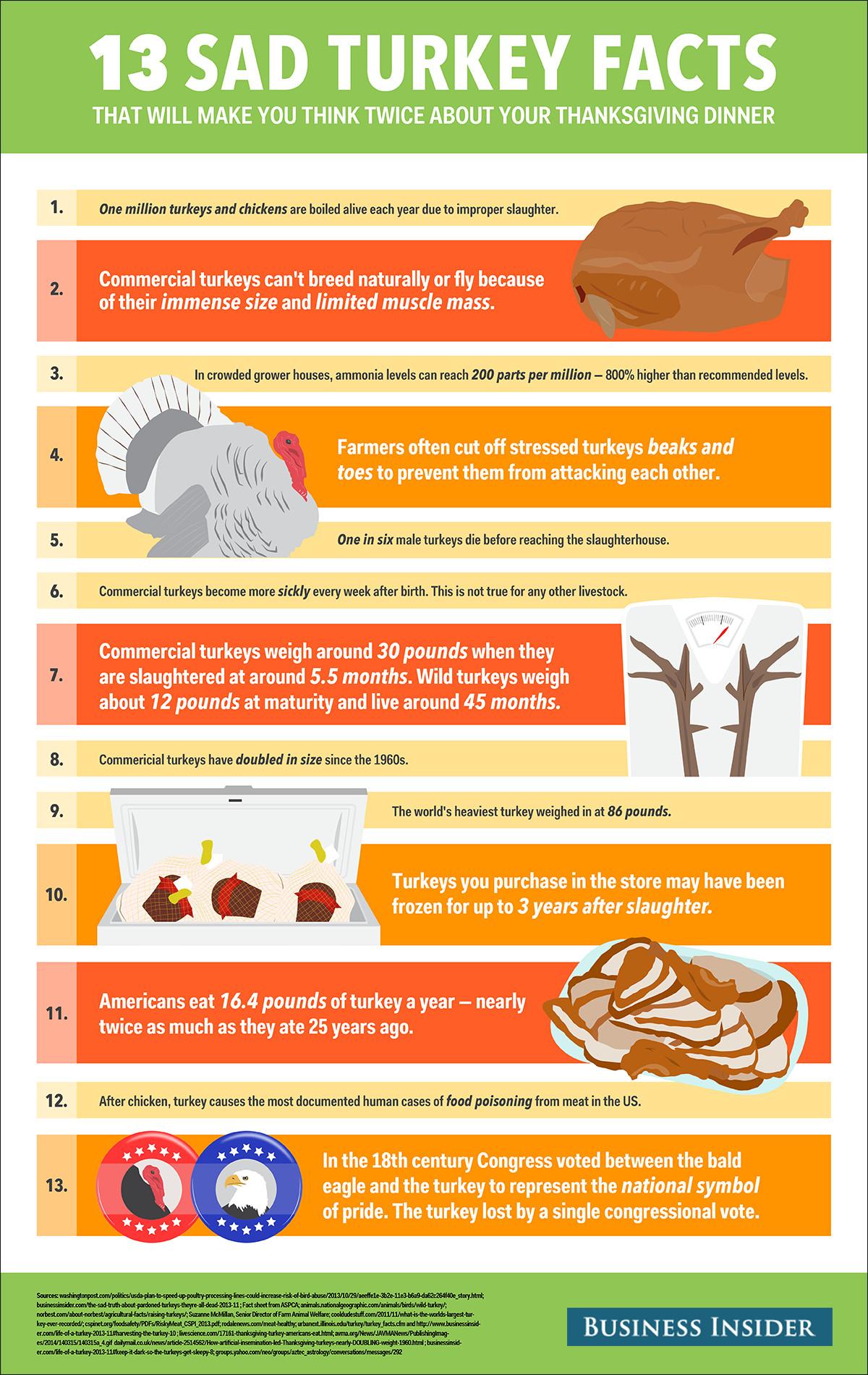 Thanksgiving Turkey Facts  Sad Turkey Facts Business Insider