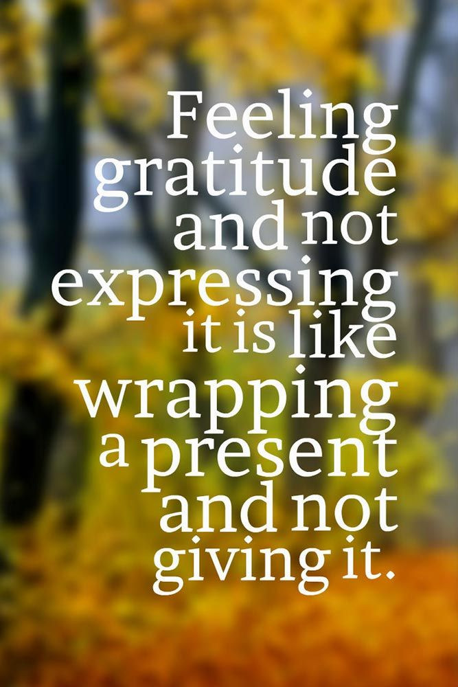 Thanksgiving Turkey Quotes  25 best Thanksgiving Quotes on Pinterest