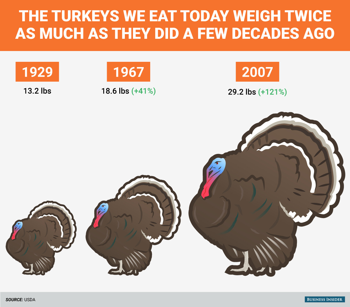Thanksgiving Turkey Size  How big turkeys were then and now Business Insider
