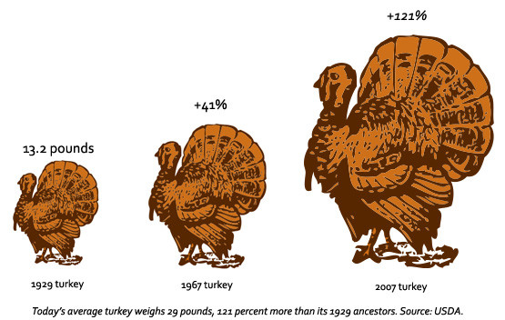Thanksgiving Turkey Size  Give Thanks Science Supersized Your Turkey Dinner