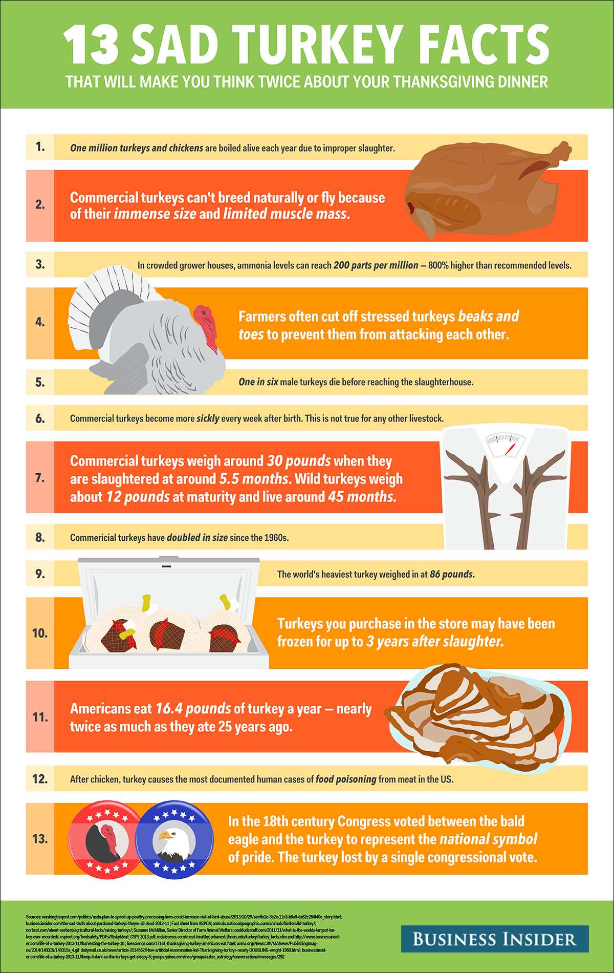 Turkey And Thanksgiving Facts  Sad Turkey Facts Business Insider