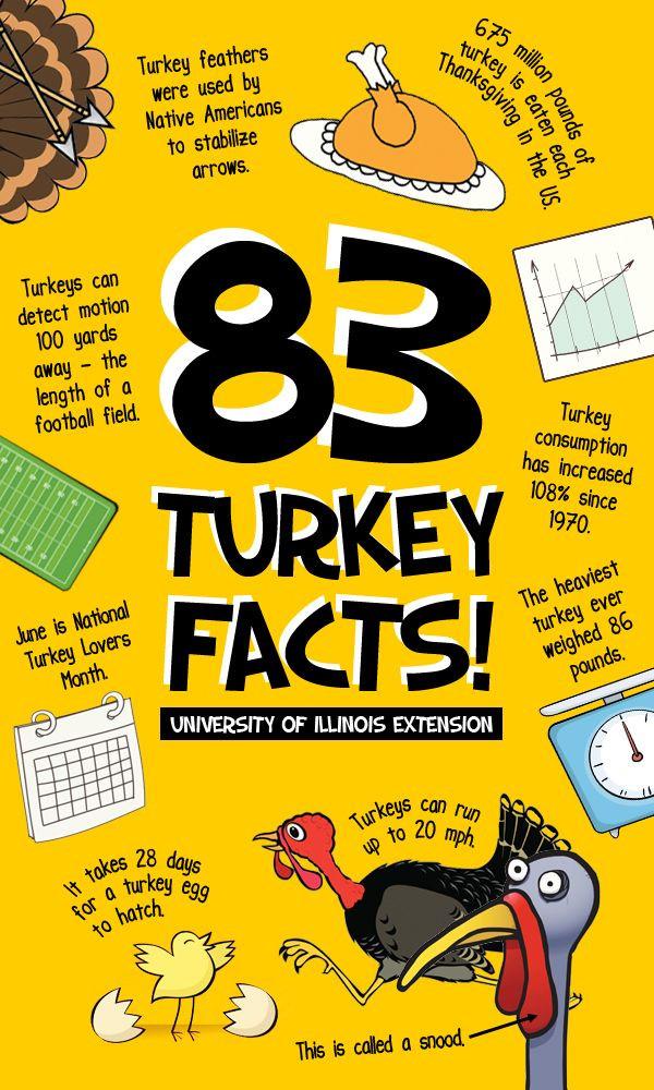 Turkey And Thanksgiving Facts  Best 25 Turkey facts ideas on Pinterest