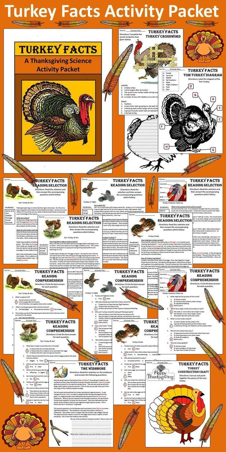 Turkey And Thanksgiving Facts  The 25 best Turkey facts ideas on Pinterest