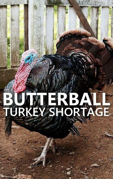 Turkey Shortage For Thanksgiving  101 best Thanksgiving Ideas images on Pinterest