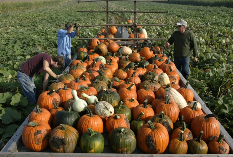 Turkey Shortage For Thanksgiving  Get Ready for a Pumpkin Pie Shortage at Thanksgiving