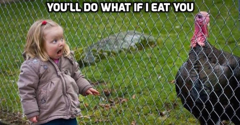 Turkey Thanksgiving Meme  These 10 Turkey Memes are Perfect for Thanksgiving