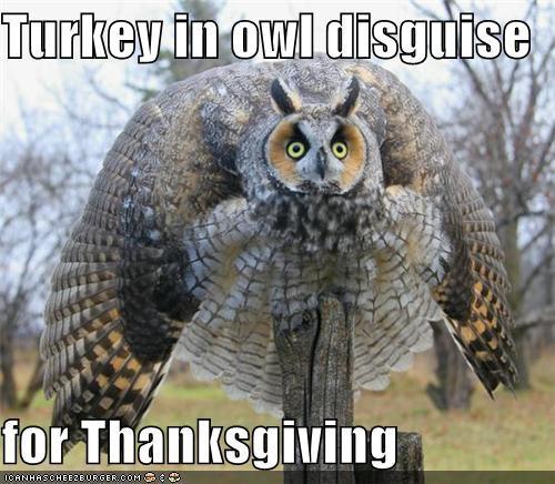 Turkey Thanksgiving Meme  Turkeys